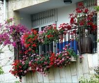 Разнообразие цветущих растений на балконе