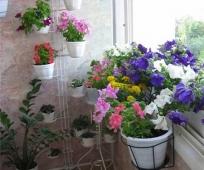 Балконные растения на подставке