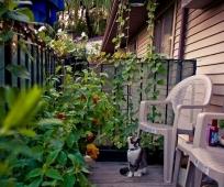 Вьющиеся растения и кустарники на балконе
