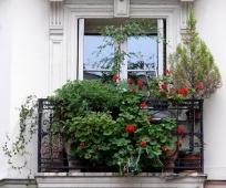 Идея озеленения открытого балкона