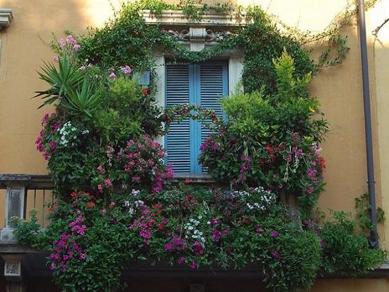Плющ на балконе