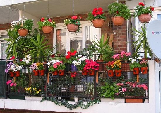 Украшение маленького балкона цветами
