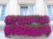 Красивое оформление балкона цветами